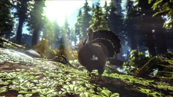 turkey-trial-2